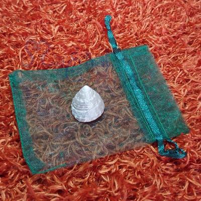 Moti Shankh / Pearl Conch